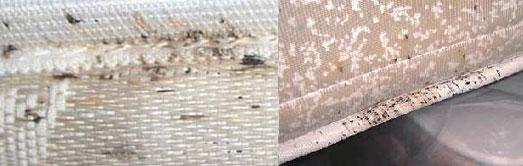 bed bug infestation in mattress